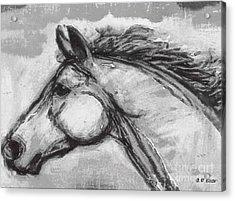 Horse Head Study Acrylic Print by Elizabeth Coats