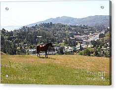 Horse Hill Mill Valley California 5d22662 Acrylic Print by Wingsdomain Art and Photography