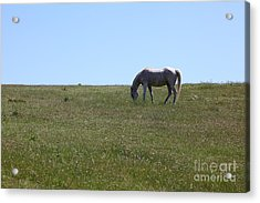 Horse Hill Mill Valley California 5d22664 Acrylic Print by Wingsdomain Art and Photography