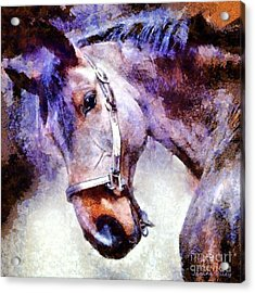 Horse I Will Follow You Acrylic Print by Janine Riley