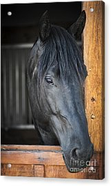 Horse In Stable Acrylic Print by Elena Elisseeva