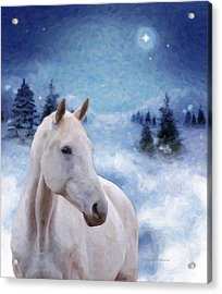 Horse In Winter Acrylic Print by Kenny Francis