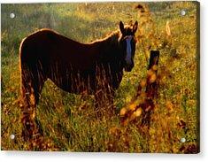 Horse Acrylic Print by Jim Vance