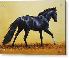 Horse Painting - Black Beauty Acrylic Print by Crista Forest
