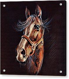 Horse Portrait  Acrylic Print by Daliana Pacuraru