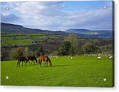 Horses And Sheep In The Barrow Valley Acrylic Print by Panoramic Images
