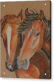 Horses Looking At You Acrylic Print by Teresa Smith