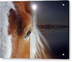 Horses  Acrylic Print by Mark Ashkenazi