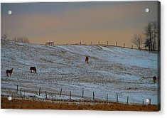 Horses On The Farm In Winter Acrylic Print by Dan Sproul