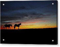 Horses Walking In The Sunset Acrylic Print by Aged Pixel
