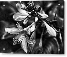 Hosta Lilies  Acrylic Print by Bellesouth Studio