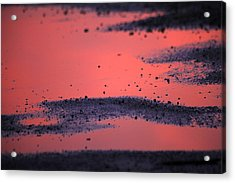 Hot Pink Puddle Acrylic Print by Karol Livote