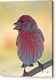 House Finch II Acrylic Print by Debbie Portwood