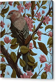 House Finch Acrylic Print by Rick Bainbridge