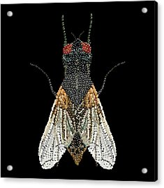 House Fly Bedazzled Acrylic Print by R  Allen Swezey