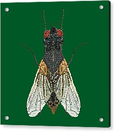 House Fly In Green Acrylic Print by R  Allen Swezey