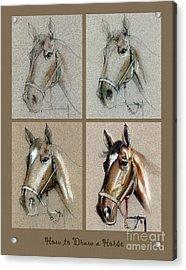 How To Draw A Horse Portrait Acrylic Print by Daliana Pacuraru
