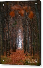 Viewed 250 Times. How To Open Door To Paradise  Psalm  Viewed 216 Times  Acrylic Print by  Andrzej Goszcz