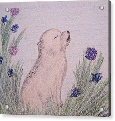 Howling Wolf Pup Acrylic Print by Christine Corretti