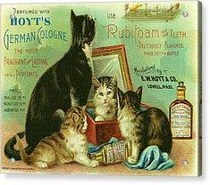 Hoyts Cats Acrylic Print by Georgia Fowler