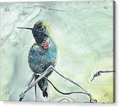 Humming Bird Acrylic Print by Donna Turbyfill