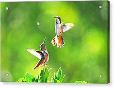 Hummingbird Dance  Acrylic Print by Lynn Bauer