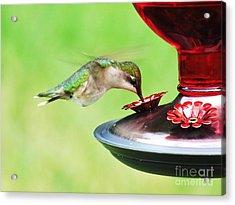 Hummingbird Details 3 Acrylic Print by Judy Via-Wolff