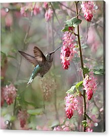 Hummingbird Heaven Acrylic Print by Angie Vogel