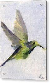 Hummingbird Watercolor Bird Painting Acrylic Print by Beverly Brown Prints