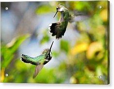 Hummingbirds Ensuing Battle Acrylic Print by Christina Rollo