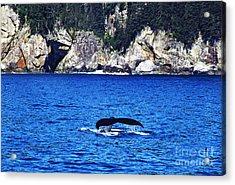 Humpback Whale Alaska Acrylic Print by Thomas R Fletcher