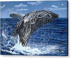 Humpback Whale Acrylic Print by Tom Blodgett Jr