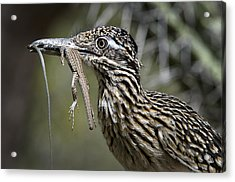 Hungry Anyone??  Acrylic Print by Saija  Lehtonen