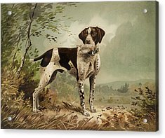 Hunting Dog Circa 1879 Acrylic Print by Aged Pixel