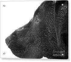 Hunting Dog Acrylic Print by Jennifer Kimberly
