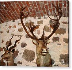 Hunting Trophys Acrylic Print by Rudi Prott