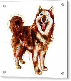 Husky Dog Watercolor Acrylic Print by Marian Voicu