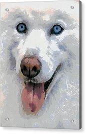 Husky Acrylic Print by Georgi Dimitrov