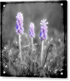 Hyacinth Soldiers Acrylic Print by Gothicolors Donna Snyder