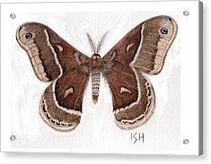 Hyalophora Cecropia/gloveri Hybrid Moth Acrylic Print by Inger Hutton