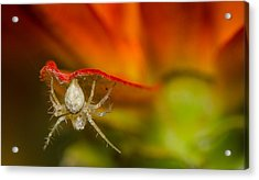 I Am Spiderman Acrylic Print by Tin Lung Chao
