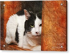 I Have My Eye On You Acrylic Print by Andee Design