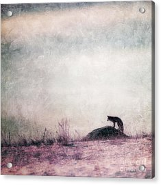 I Only Hear Silence Acrylic Print by Priska Wettstein