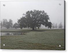 I Saw In Louisiana Acrylic Print by Cheri Randolph