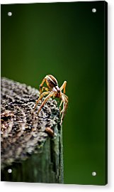 I See You Acrylic Print by Swift Family