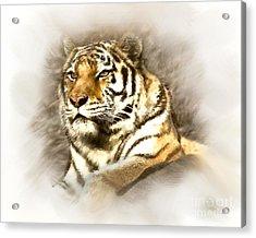 I Should Be King Acrylic Print by Arne Hansen