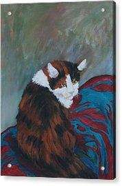 I Want My Lap Acrylic Print by Gail Daley