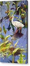 Ibis Deux Acrylic Print by Laurie Hein
