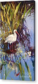 Ibis  Acrylic Print by Laurie Hein