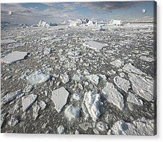 Ice Floes Antarctica Acrylic Print by Gerry Ellis
